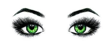 Schöne offene weibliche grüne Augen mit den langen Wimpern wird auf einem weißen Hintergrund lokalisiert Make-upschablonenillustr lizenzfreie abbildung