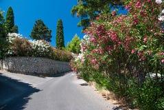 Schöne Oleanderblumen auf einer griechischen Straße Lizenzfreie Stockbilder