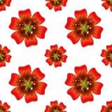Schöne orange Blume Nahtloses Blumenmuster Vektor Lizenzfreie Stockfotografie