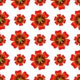 Schöne orange Blume Nahtloses Blumenmuster Vektor Stockfotos