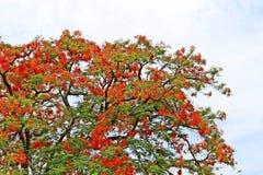 Schöne orange Blumen Lizenzfreies Stockbild