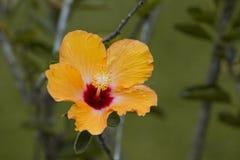 Schöne orange Blumen auf einem Gebiet Stockfotos
