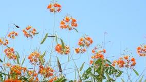 Schöne orange Blumen auf einem Hintergrund des Himmels stock footage