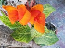 Schöne orange Farbblume, orange Blume stockfotografie
