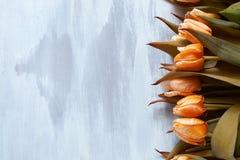 Schöne orange Tulpen auf einem hellen hölzernen Hintergrund Stockfotos