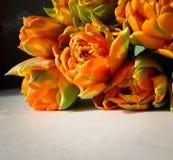 Schöne orange Tulpen auf weißem Hintergrund Vervollkommnen Sie für Hintergrundgrußkarte stockfotos