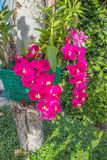 Schöne Orchidee Stockfotografie