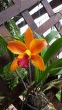 Schöne Orchidee stockbild