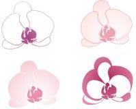 Schöne Orchidee Lizenzfreies Stockfoto