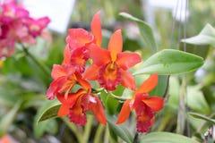 Schöne Orchidee auf unscharfem Hintergrund, selektiver Fokus Lizenzfreies Stockfoto