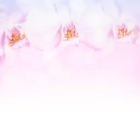 Schöne Orchidee blüht Grenze Stockfoto