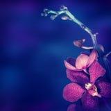 Schöne Orchidee-Blume stockfotografie