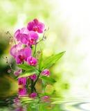 Schöne Orchidee und Bambus für Grenzbehandlungsbadekurort auf Wasser Lizenzfreie Stockfotos