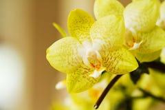 Schöne Orchideeblumen Stockbilder