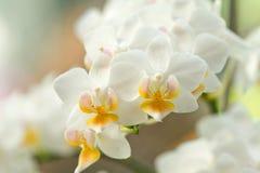 Schöne Orchideeblumen Stockfotografie