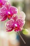 Schöne Orchideeblumen Lizenzfreies Stockfoto