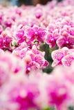 Schöne Orchideeblumen Lizenzfreies Stockbild