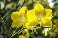 Schöne Orchideen lizenzfreies stockfoto
