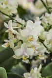 Schöne Orchideen stockfotos