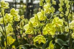Schöne Orchideen lizenzfreies stockbild