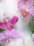 Schöne Orchideen Stockbild