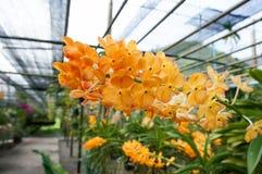 Schöne Orchideen im Bauernhof lizenzfreies stockfoto
