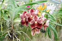 Schöne Orchideen im Bauernhof lizenzfreie stockbilder