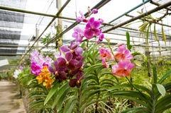 Schöne Orchideen im Bauernhof stockfotografie