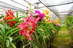 Schöne Orchideen im Bauernhof lizenzfreies stockbild