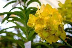 Schöne Orchideenblume und Grünblatthintergrund im Garde Lizenzfreie Stockfotos