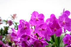 Schöne Orchideenblume und Grünblatthintergrund im Garde Lizenzfreies Stockbild