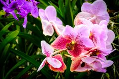 Schöne Orchideenblume und Grünblatthintergrund im Garde Stockbilder