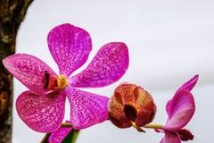 Schöne Orchideenblume und Grünblatthintergrund im Garde Stockbild