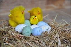 Schöne Ostereier und gelbe Hühner Lizenzfreies Stockbild