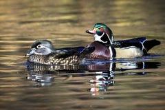Schöne Paare der hölzernen Ente Stockbilder