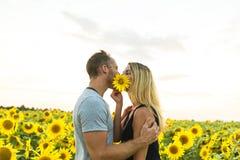Schöne Paare, die Spaß auf den Sonnenblumengebieten haben Stockfoto