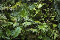 Schöne Palmblätter des Baums im Sonnenlicht Stockbild