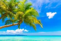Schöne Palme über weißem Sandstrand Schöne Palme über weißem Sandstrand Sommer n Stockfotografie