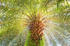 Schöne Palme Stockfoto