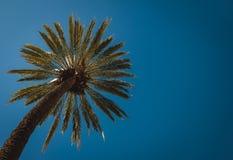 Schöne Palme Stockbilder