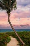 Schöne Palme auf einem tropischen Strand Stockfotografie