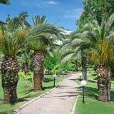 Schöne Palmengasse Stockfoto