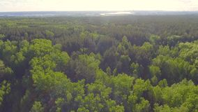 Schöne panoramische Vogelperspektive auf Wald von oben Foto gemacht unter Verwendung des Brummens Draufsicht über Bäume stock video