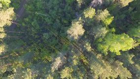 Schöne panoramische Vogelperspektive auf Wald von oben Foto gemacht unter Verwendung des Brummens Draufsicht über Bäume stock footage