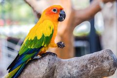 Schöne Papageien sind auf dem Bauholz lizenzfreie stockbilder