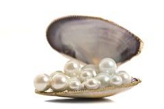 Schöne Perlen in einem Seashell Lizenzfreies Stockfoto