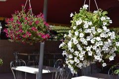 Schöne Petunien in den Blumentöpfen auf der Straße lizenzfreies stockbild