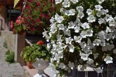 Schöne Petunien in den Blumentöpfen auf der Straße stockfoto