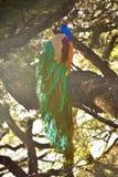 Schöne Pfau-Nahaufnahme auf Baum stockfotografie
