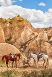Schöne Pferde in Rosen-Tal nahe Goreme, die Türkei lizenzfreie stockfotografie